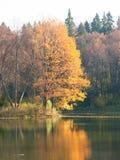 jesień staw Obrazy Royalty Free