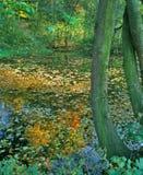 Jesień staw Zdjęcia Royalty Free