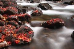 jesień strumień Zdjęcie Royalty Free