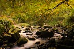 Jesień strumień Fotografia Royalty Free