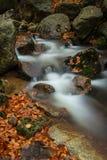 Jesień strumienie Zdjęcie Royalty Free