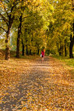 Jesień sunlay w liściach na których iść dziewczyna Zdjęcia Stock