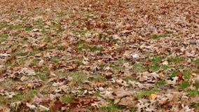 Jesień susi liście na ziemi na wietrznym dniu zbiory