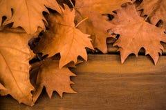 Jesień susi liście z drewnianą powierzchnią zdjęcie royalty free