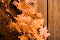 Jesień susi liście z drewnianą powierzchnią obraz royalty free