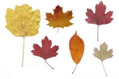 jesień suszący liść Zdjęcia Stock