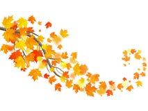 Jesień szablon z klonowymi jesień liśćmi 10 eps royalty ilustracja