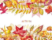 Jesień szablonu tło Sezonowe ilustracje Sieć sztandaru szablon beak dekoracyjnego latającego ilustracyjnego wizerunek swój papier Fotografia Royalty Free