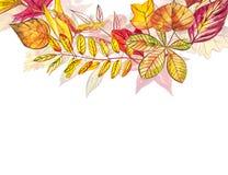 Jesień szablonu tło Sezonowe ilustracje Sieć sztandaru szablon beak dekoracyjnego latającego ilustracyjnego wizerunek swój papier Fotografia Stock