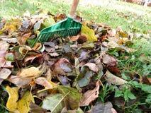 Jesień szczegół opuszcza w zielonej trawie i tle Zdjęcia Royalty Free