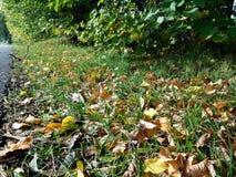 Jesień szczegół opuszcza w zielonej trawie i tle Zdjęcia Stock