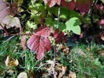 Jesień szczegółu liść Fotografia Stock