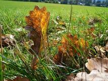 Jesień szczegółu liść w zielonej trawie i tle Obrazy Stock