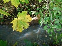 Jesień szczegółu rzeka i liść Obraz Stock