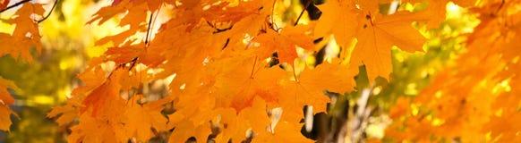 Jesień sztandar, tło obraz stock
