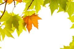 jesień tła dekoracyjna rama odizolowywająca opuszczać rejestracyjnego biel Fotografia Royalty Free