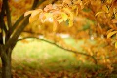 8 jesień tła eps kartoteka zawierać drzewo Obrazy Royalty Free