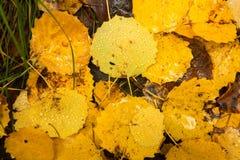 jesień tła kolorowi liść Obraz Stock