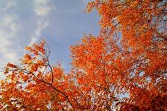 jesień tła kolorowi susi liść Zdjęcia Royalty Free