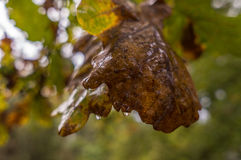 jesień tła kolorowi susi liść Fotografia Stock