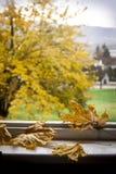jesień tła kolorowi susi liść Obraz Stock