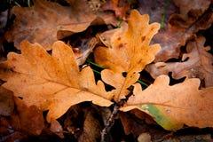 jesień tła kolorowi susi liść Fotografia Royalty Free