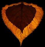 jesień tła kolorowi susi liść Obrazy Stock