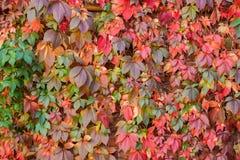 jesień tła kolorowy liść Zdjęcia Royalty Free