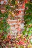 jesień tła kolorowy liść Obrazy Stock