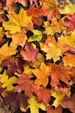 jesień tła kopii liść przestrzeń drewniana obraz stock