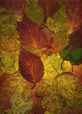 jesień tła liść Fotografia Royalty Free