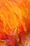 jesień tła liść Zdjęcie Royalty Free