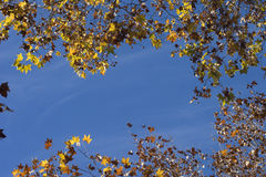 jesień tła liść fotografia stock