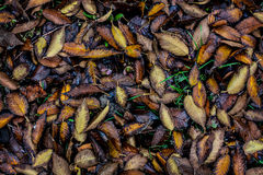 jesień tła liść mokrzy Obrazy Royalty Free