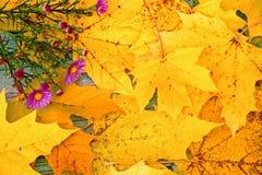 jesień tła liść obiektyw zrobił obrazka klonowemu dodatek specjalny Zdjęcie Stock