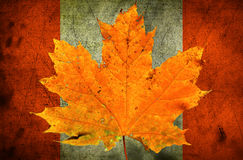 jesień tła odosobnionego liść klonowy biel Obrazy Royalty Free
