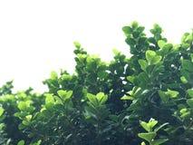 jesień tła ptaków lota zieleń opuszczać słońce zwrot promieniom Obrazy Royalty Free