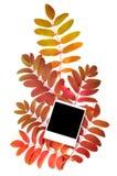 jesień tła ramy zdjęcie royalty free