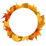 jesień tła ramy liść biel Zdjęcia Stock