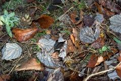 jesień tło Obrazy Royalty Free