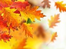 jesień tło Zdjęcia Stock