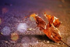 jesień tło kolor żółty gałęziastych jaskrawy kolorów złoty liść opuszczać klonowego pomarańczowej czerwieni słońca drzewa kolor ż Zdjęcia Royalty Free