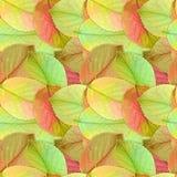 jesień tło leafs bezszwowy Zdjęcia Royalty Free