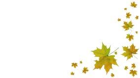 jesień tło opuszczać biel Zdjęcia Royalty Free