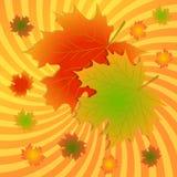 jesień tło opuszczać klonu Obraz Stock