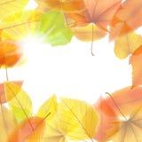 jesień tło opuszczać klonu plus EPS10 ilustracja wektor