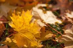 jesień tło opuszczać kolor żółty Obrazy Stock