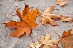 jesień tło opuszczać kolor żółty Fotografia Stock