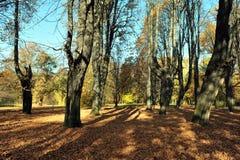 jesień tajemnicy park Obrazy Royalty Free