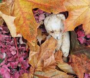 Jesień Ted Obrazy Royalty Free